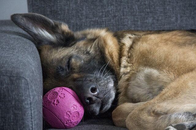 Quanto tempo de sono meu cachorro precisa?