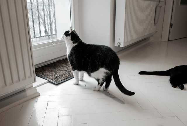 Quanto tempo você pode deixar um gato sozinho?