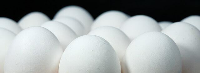 6 razões para o cachorro comer ovo
