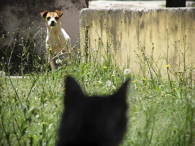 Reduzir a ansiedade em gatos