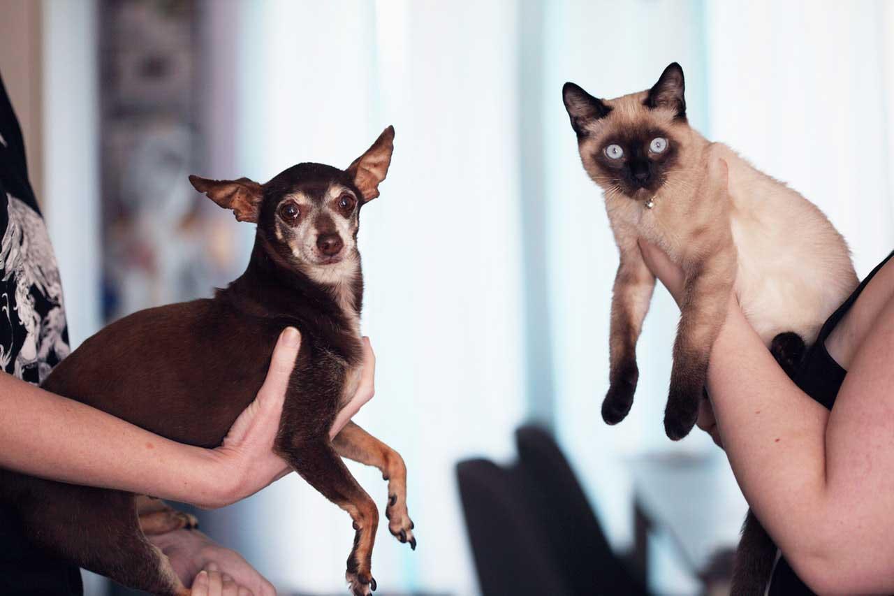 Como o Reiki pode ajudar animais de abrigo