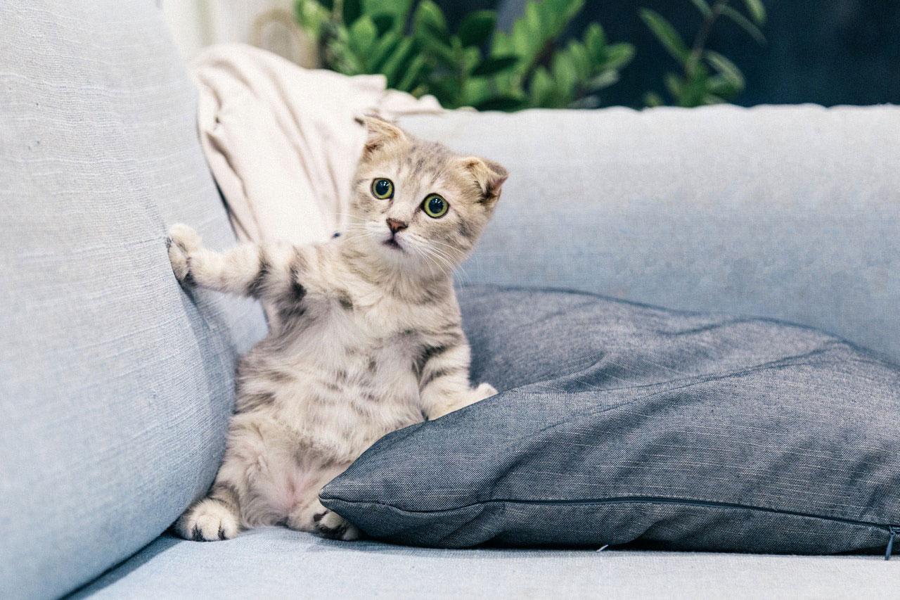 Resfriado em gatos | Como gerenciar
