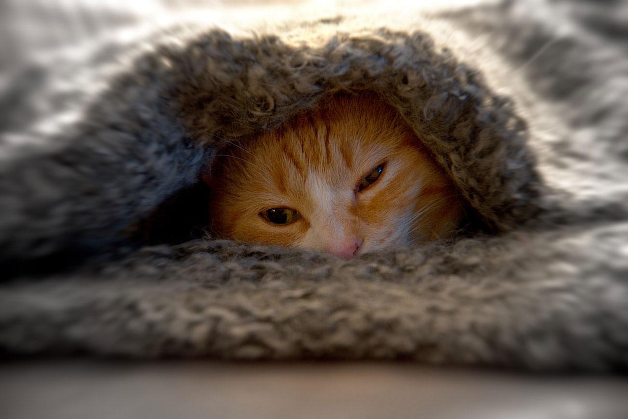 Resfriados em gatos | Causas, Sintomas e Tratamento