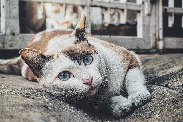 Se o seu gato faz essa coisa estranha, não ignore isso