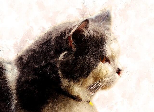 5 fatos surpreendentes sobre a doença renal em gatos