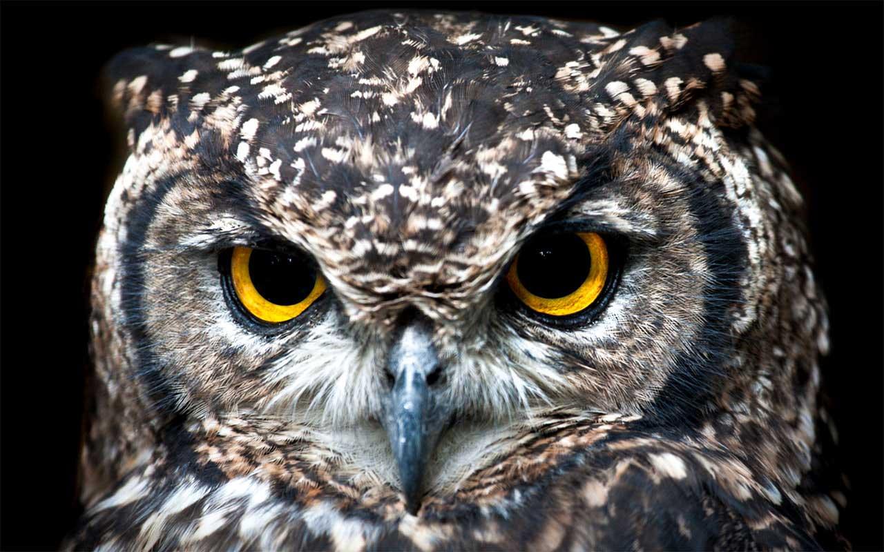 Sentidos do pássaro e como eles os usam