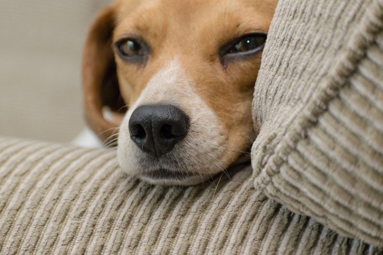 Seu animal de estimação precisa de terapia?