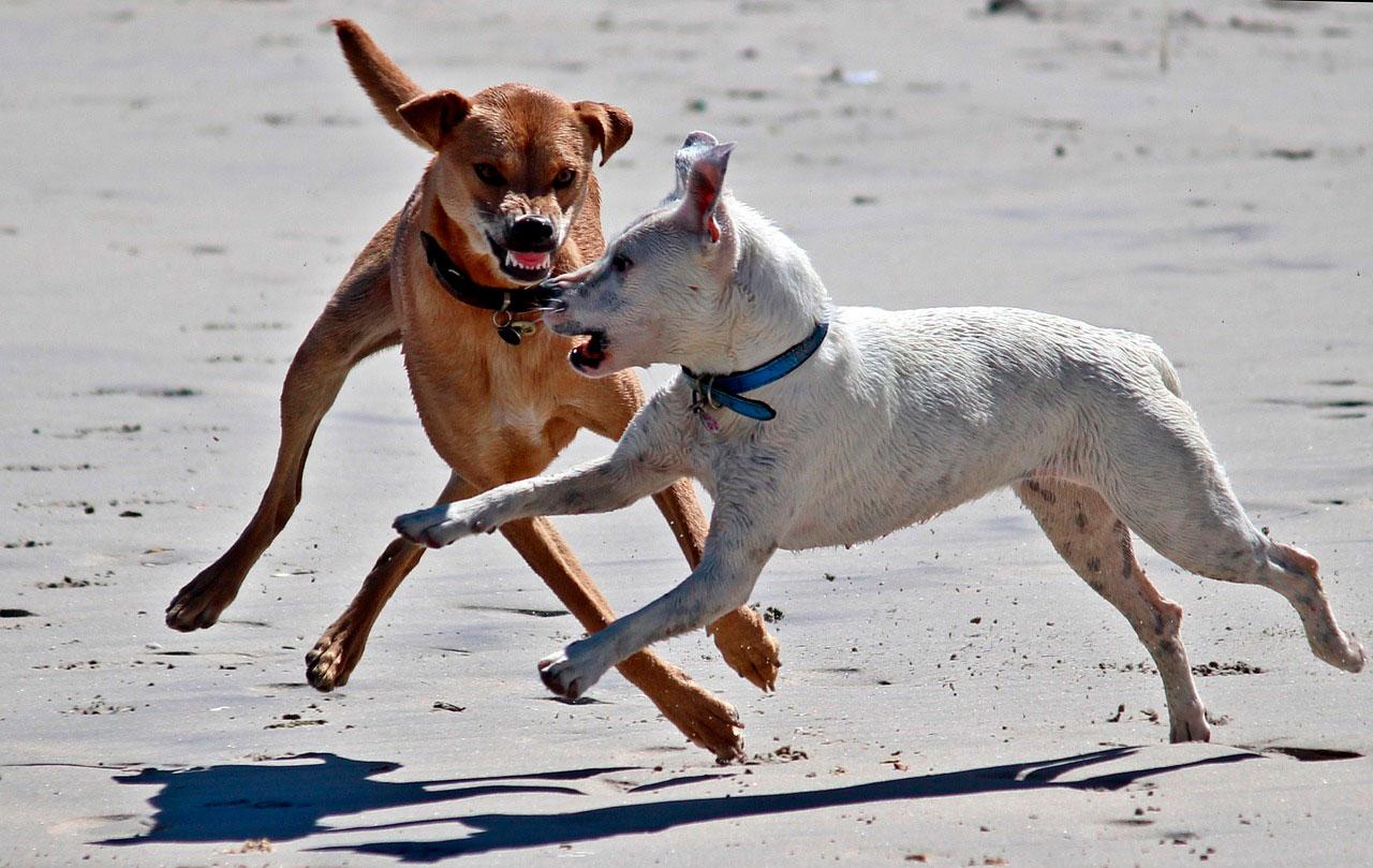 Seu cão é dominante ou submisso?
