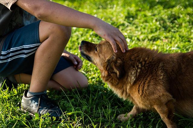 Seu cão está experimentando dor nas costas?