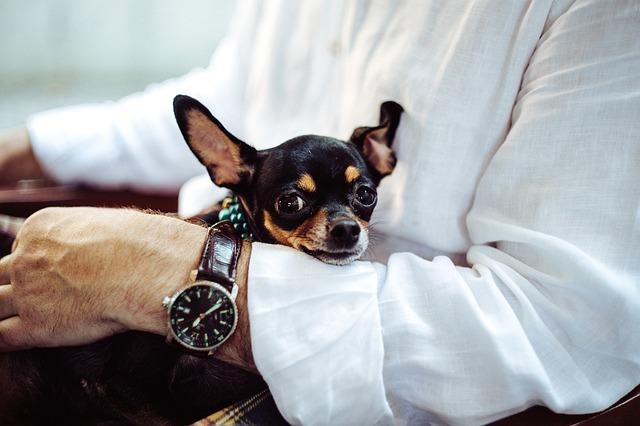 Seu cão se tornou sensível ao ruído? Pode ser dor não diagnosticada