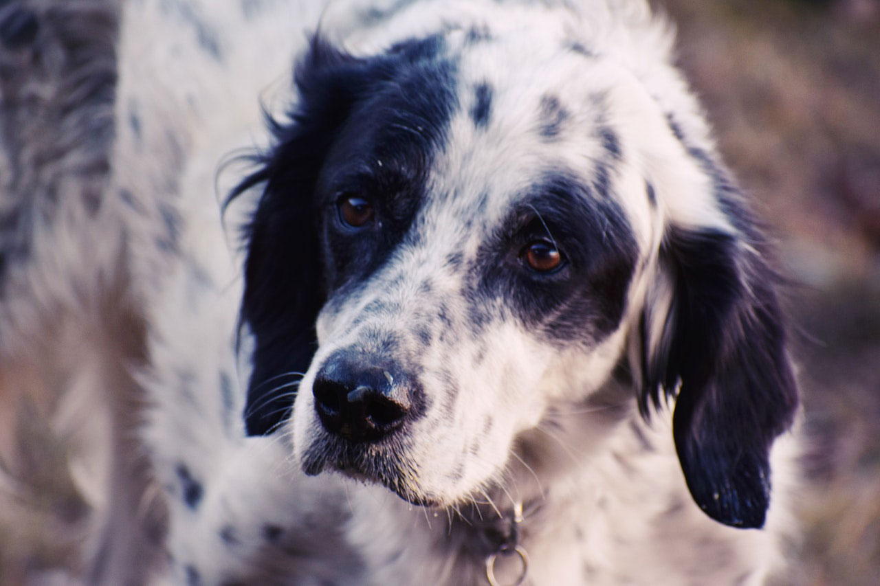 Sinais comuns de doença cardíaca em cães