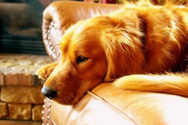 Sinais de Tumores em Cães