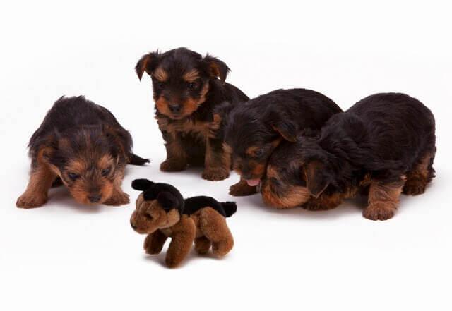 Sinais de um aborto espontâneo no cão