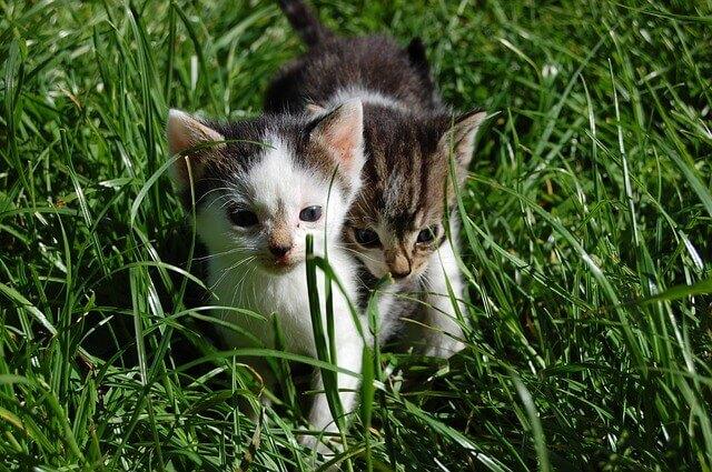 Sinais e sintomas de ansiedade em gatos