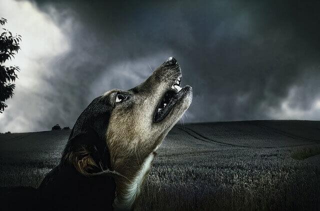 Sinais de infecções fúngicas em cães