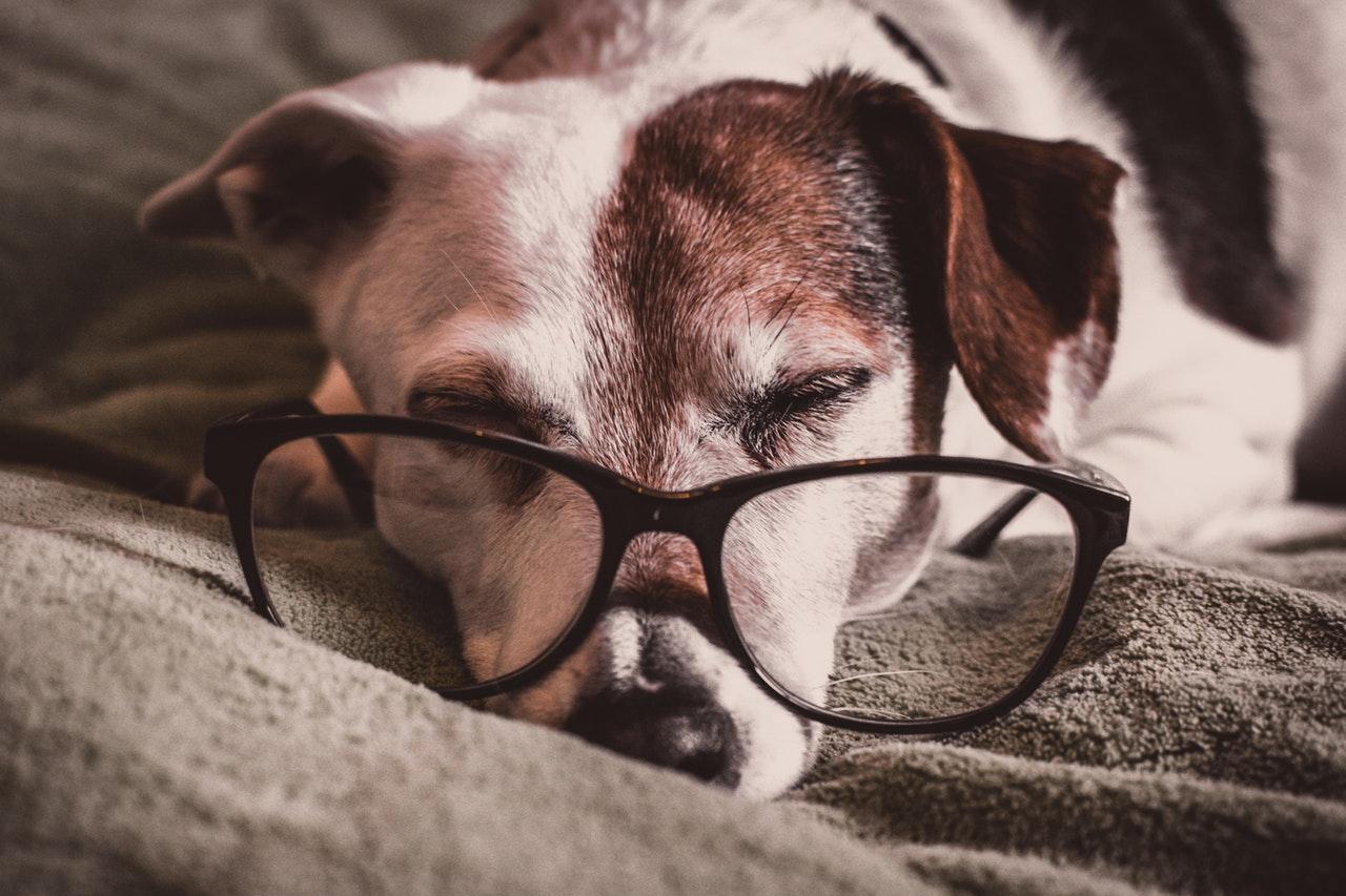 Sinais que o seu cão pode ter osteoartrite