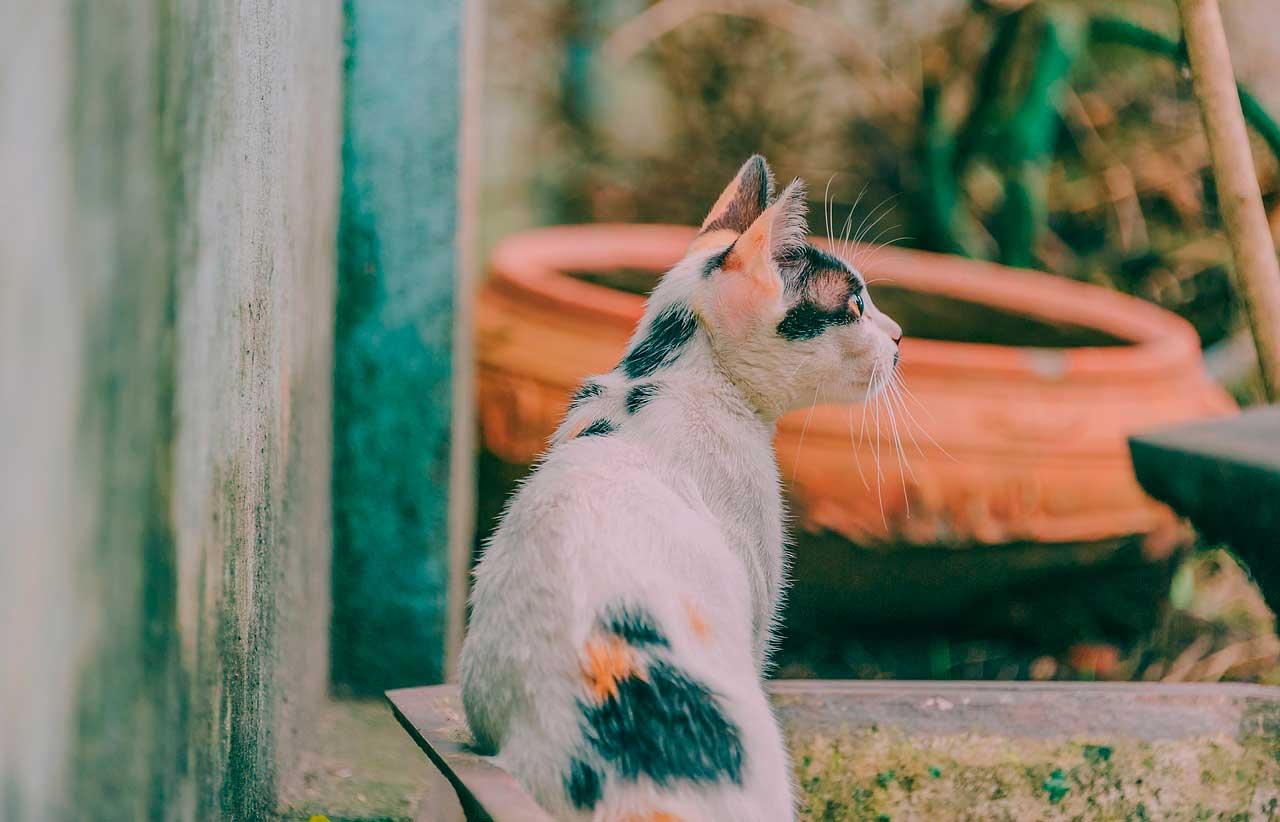 Sinais e sintomas do gato doente