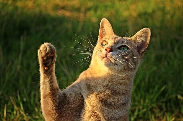 Suplementos de Glucosamina para Gatos