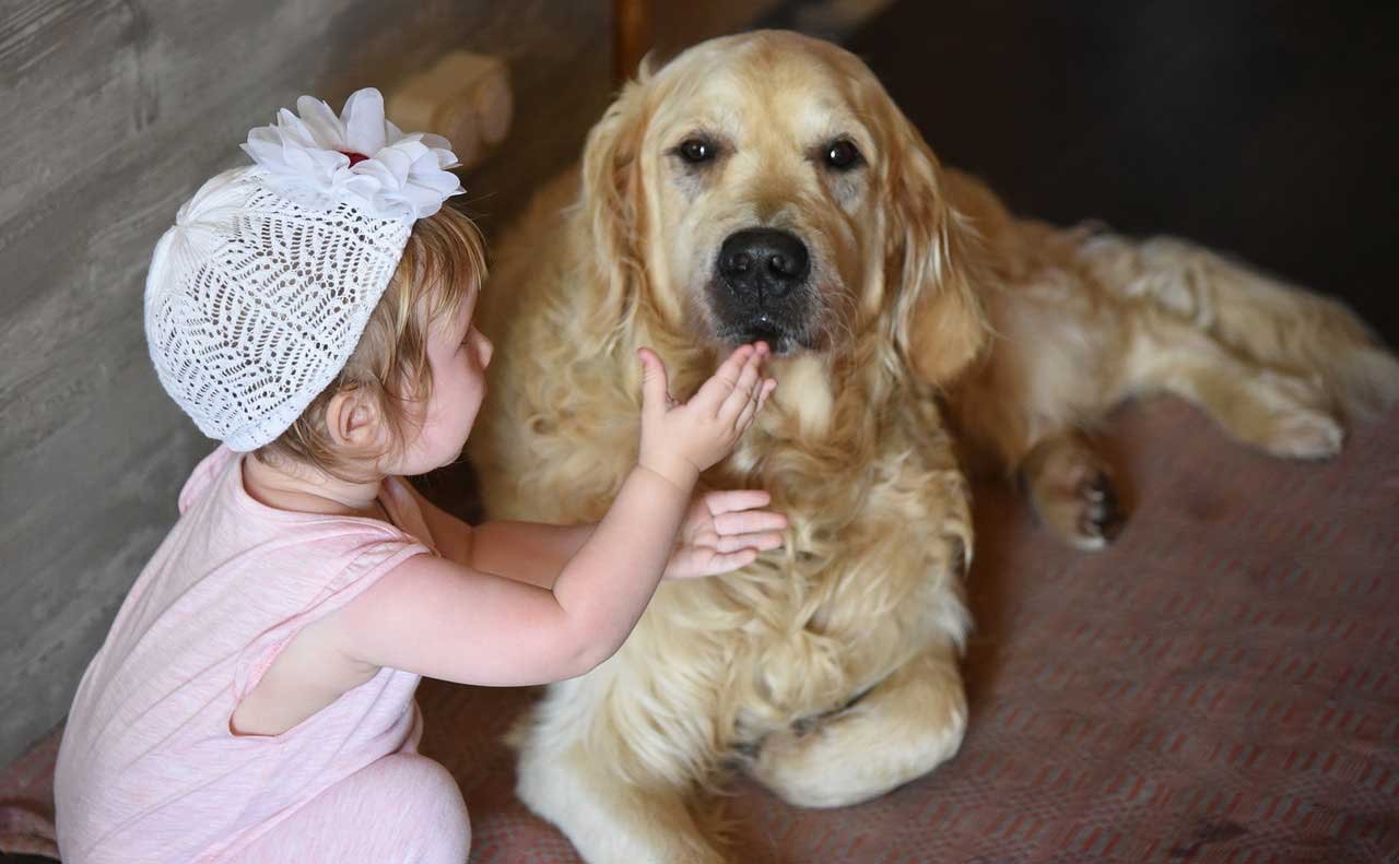 Terapia de calor e frio em cães