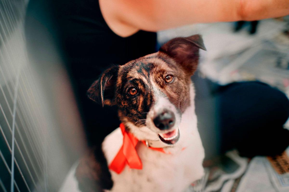 Terapia de luz em cães | Tratar lesões e artrite