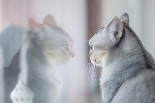 Tipos de gatos para sua personalidade