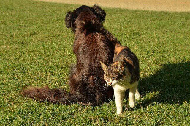 Toxicidade de ibuprofeno e naproxeno para cães e gatos