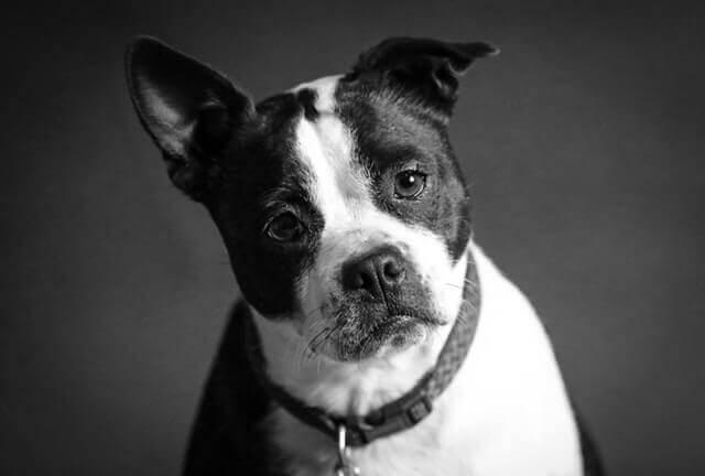 Transtorno nervoso (Polineuropatias) que afeta vários nervos em cães