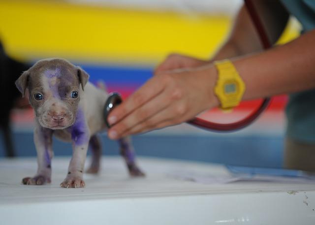 Trauma no Tendão em Cães