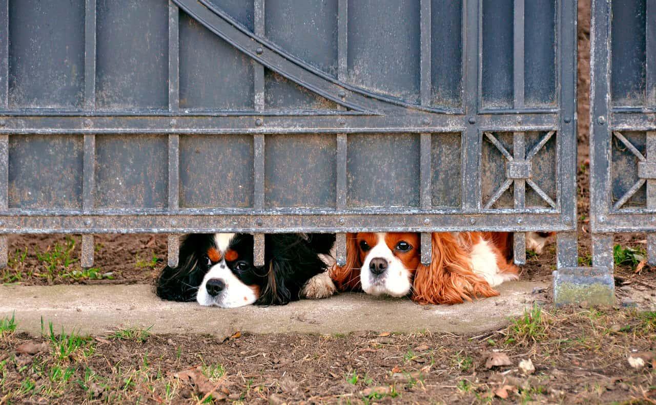 Cães tristes | Os cães sentem tristeza?