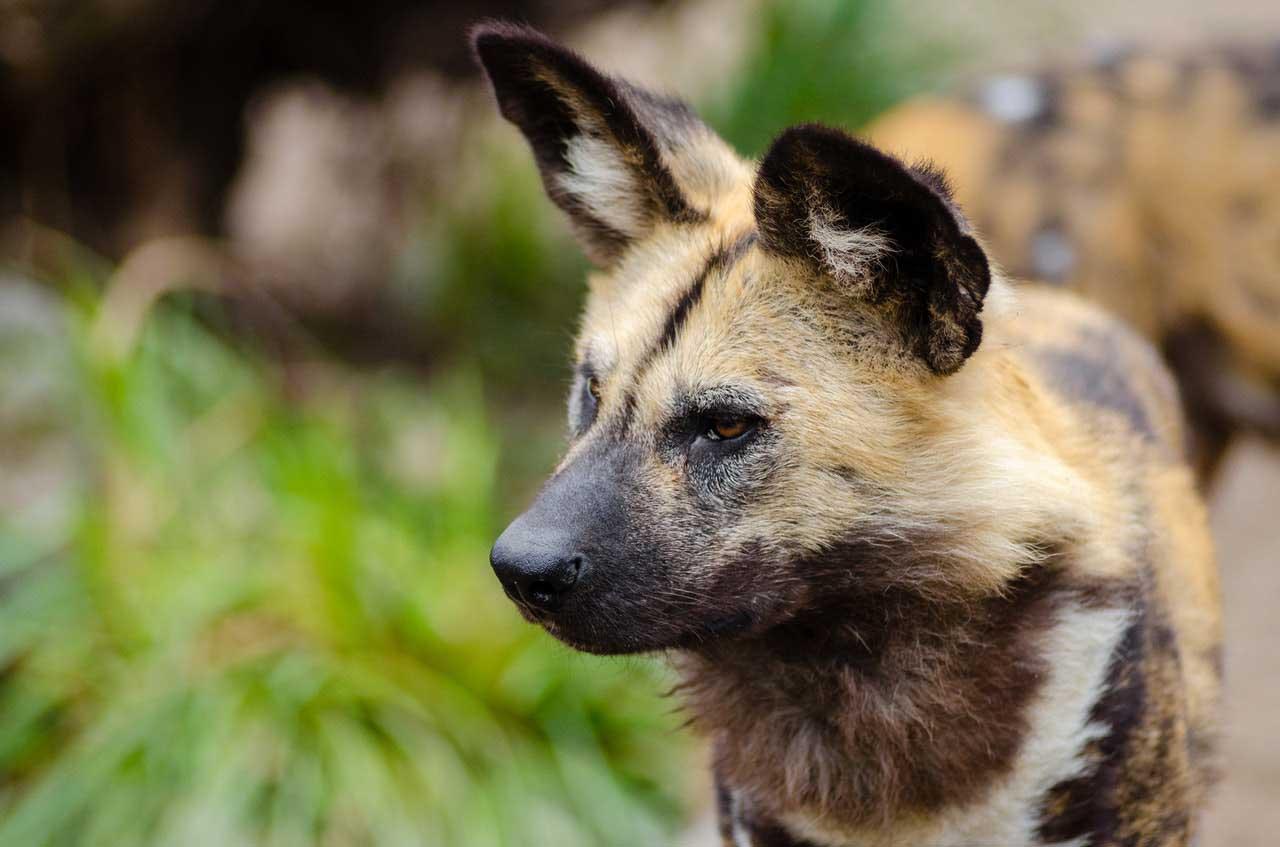 Tumores do canal auditivo em cães e gatos