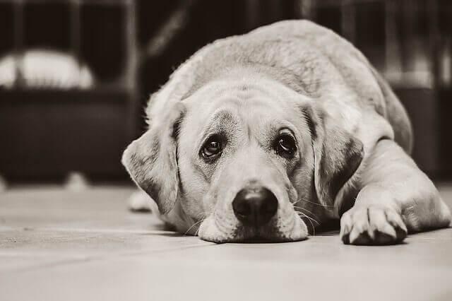 Úlceras estomacais e intestinais em cães