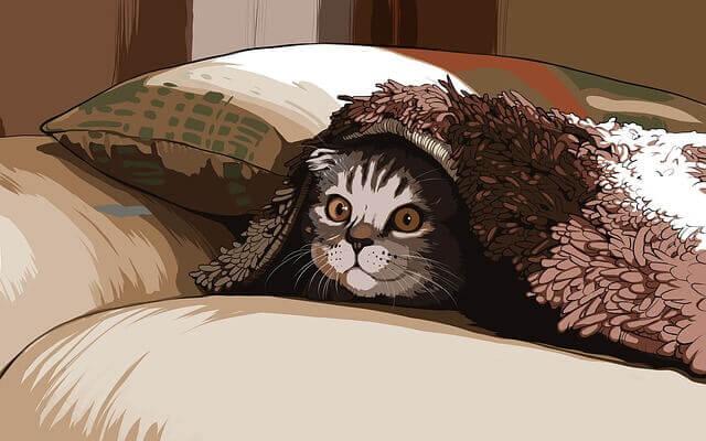 Ultra-som em gato