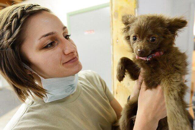 Ultrassom Abdominal para Cães