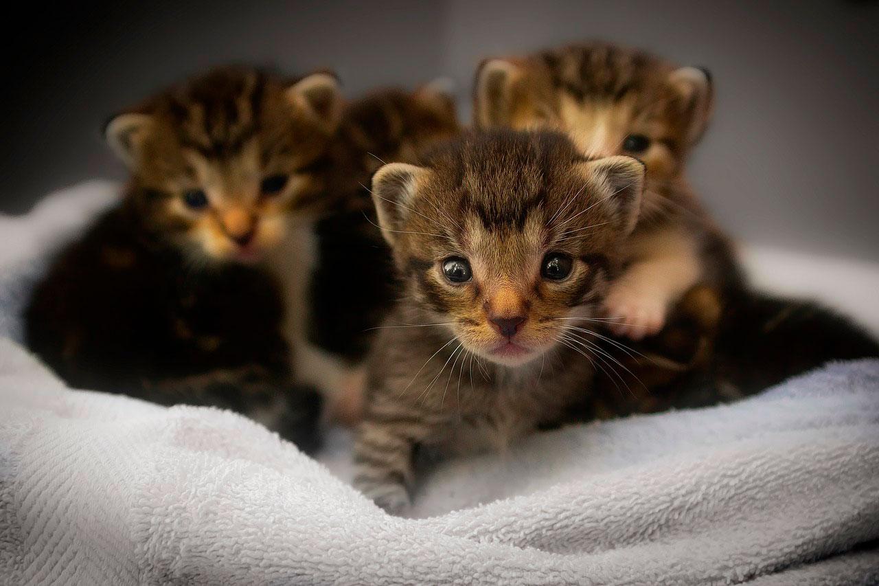 Vírus mortais em gatos | Principais vírus
