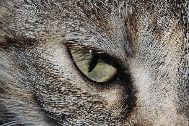 Visão de gato
