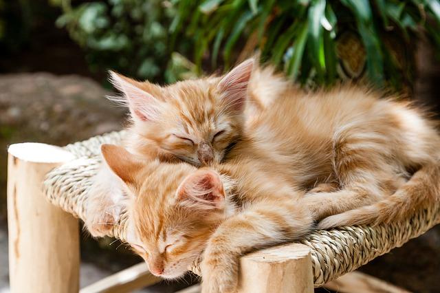 Você pode dizer se o seu gato é saudável?