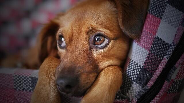 Vômito do cão: o que os humanos precisam saber sobre o vômito do cão