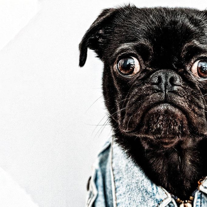 Saúde Veterinária e Qualidade de Vida para os Pets | Pet Vet Love
